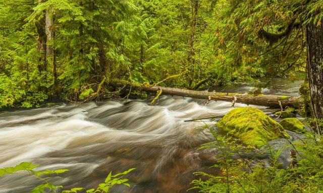7 khu rừng ấn tượng  đẹp hút hồn du khách - Ảnh 6.