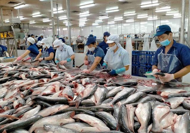 Hàng trăm tấn cá tra nằm ao, chấp nhận bán lỗ vẫn không ai mua - ảnh 1