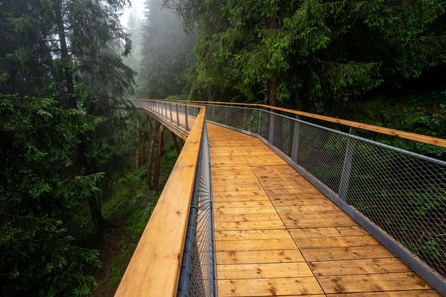 """Khám phá con đường """"trên cây"""" dài nhất thế giới tại Thụy Sĩ - Ảnh 2."""