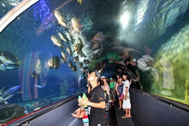 Bảo tàng Hải dương học lọt vào top 10 điểm đến du lịch Việt Nam | VTV.VN