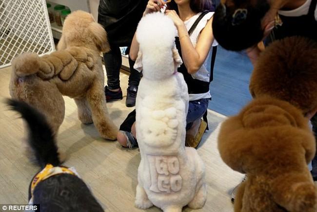"""VTV.vn - Tại Đài Loan, thay vì cắt tỉa lông như bình thường, các chú chó,  cô mèo cưng được """"phá cách"""" với những hình thù vô cùng lạ mắt và đáng ..."""