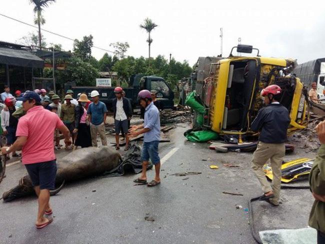 Lật xe chở trâu gây ách tắc QL1 đoạn qua tỉnh Quảng Bình - ảnh 1