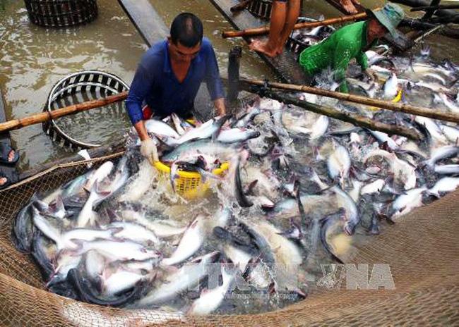 Xuất khẩu thủy sản giảm gây tác động mạnh giá trong nước - ảnh 1