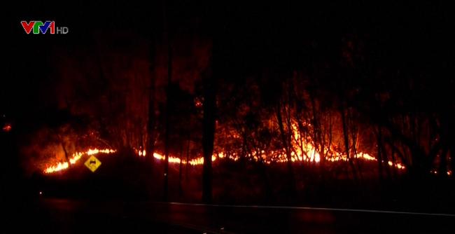 Thương vong kỷ lục do cháy rừng tại Mỹ - ảnh 1