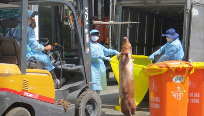 Phát hiện thêm lô lợn bị tiêm thuốc an thần ở lò Hòa Phú, TP.HCM - ảnh 1