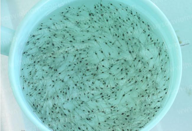 Phát hiện hơn 300.000 con tôm giống nhập lậu tại Kiên Giang - ảnh 1