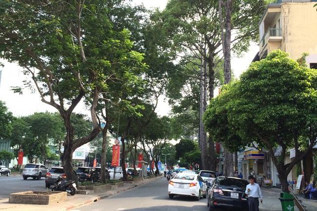 TP.HCM: Xử lý hơn 100 cây xanh quanh sân bay để giải quyết ùn tắc - ảnh 2