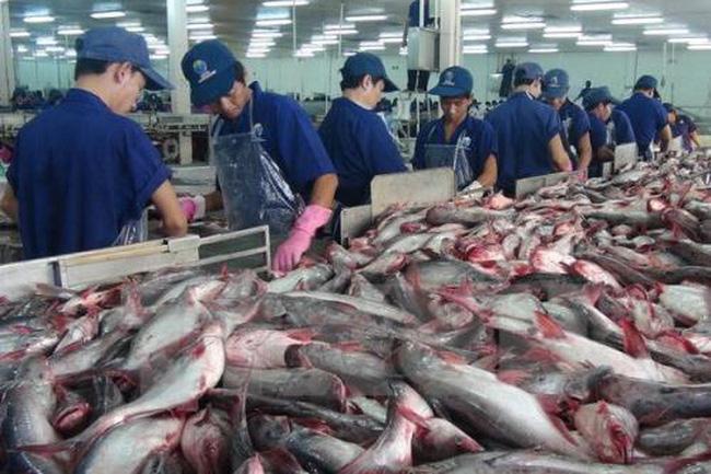 Xuất khẩu cá tra sang Hoa Kỳ giảm mạnh - ảnh 2