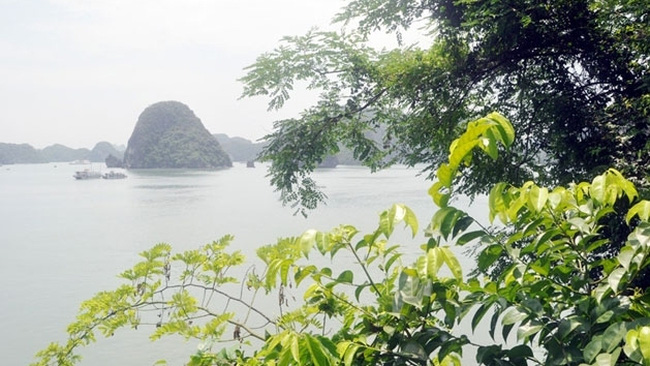Although the Soi Sim island has only recently been put into operation for the last ten years, it has quickly become an attractive place for foreign tourists.