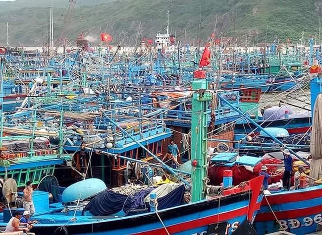 Đề nghị tính toán lại quy hoạch phát triển cảng Quy Nhơn - ảnh 2