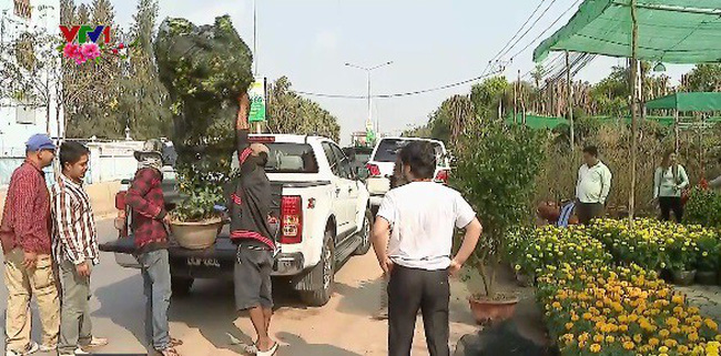 Chợ hoa Tết ở Phnom Penh, Campuchia - ảnh 1