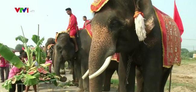 Tiệc buffet trái cây dành cho... voi tại Thái Lan - ảnh 2