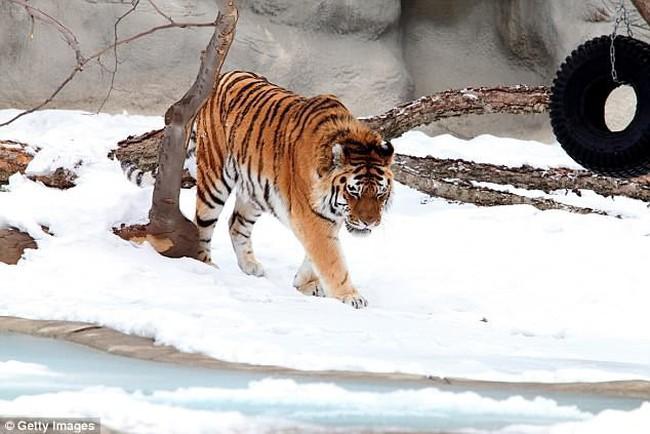 Du khách đến vườn thú được tặng hộp chứa 2kg chất thải động vật - ảnh 4
