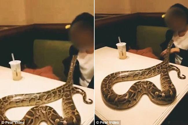 Chủ quán ngất xỉu khi thấy thực khách mang trăn lớn vào nhà hàng - ảnh 3