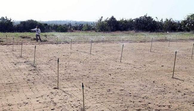 Ninh Thuận: 21 hồ chứa nước bị khô hạn - ảnh 2