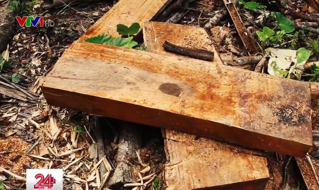 Hà Giang tăng cường ngăn chặn tình trạng phá rừng trái phép - ảnh 2