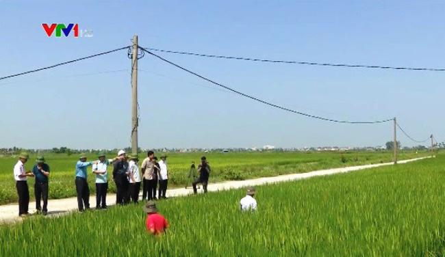 Kiểm tra phòng chống bão số 6 và sản xuất nông nghiệp tại Hải Phòng - ảnh 1