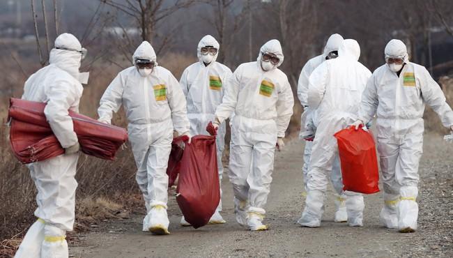 Nhật Bản tiêu hủy 91.000 con gà, ngăn cúm gia cầm lây lan - ảnh 2