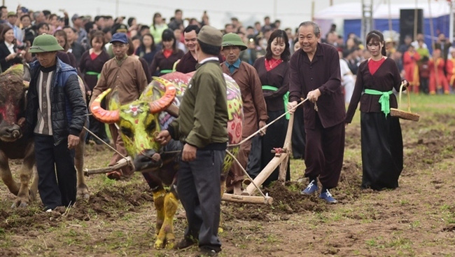 Deputy PM Truong Hoa Binh ploughed the field with local farmers. (Photo: Dao Phuong)
