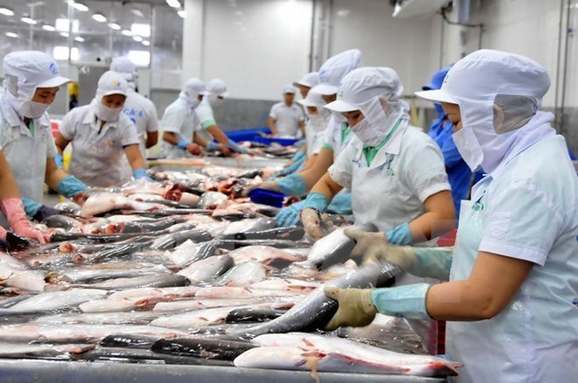 Tra fish processing for export (Source: VNA)