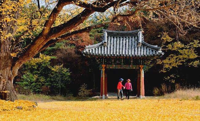 Khám phá 4 mùa rực rỡ của thiên đường du lịch Gyeongsangbuk - ảnh 3