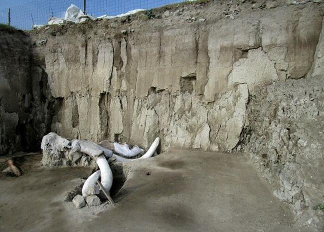 Mexico phát hiện 800 chiếc xương hóa thạch voi ma mút - ảnh 1