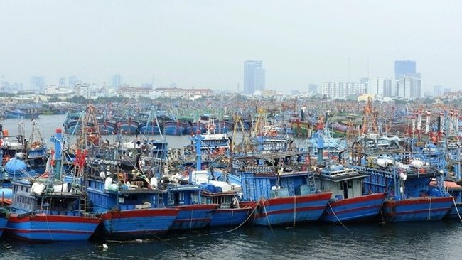 Thousands of fishing boats safely anchored in Tho Quang wharf in Da Nang. (Photo: NDO/Thanh Tung)