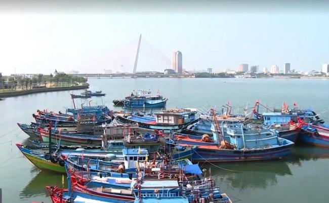 Họp ban chỉ đạo ngăn chặn khai thác hải sản bất hợp pháp - ảnh 1