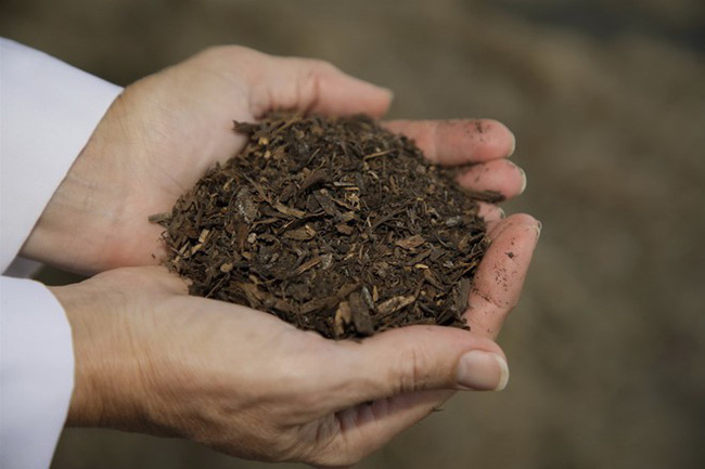 Mỹ: Cân nhắc cho phép sản xuất phân bón cây từ thi thể người chết