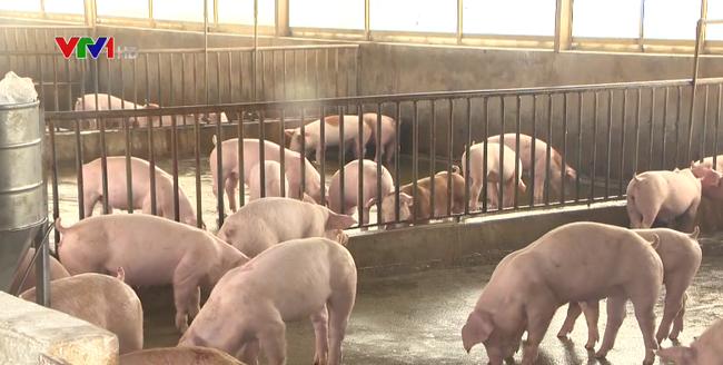 Sức Tieu Thụ Thịt Lợn Hai Miền Bắc Trung đa Sang Sủa Hơn Vtv Vn