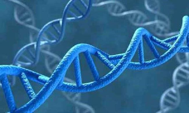 Somalia lần đầu tiên sử dụng ADN để kết án các yêu râu xanh - ảnh 1
