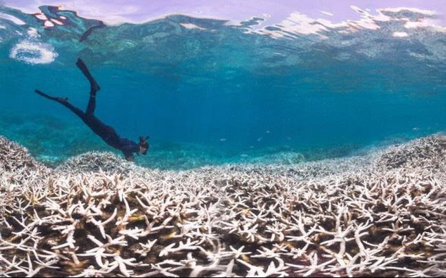 Hy vọng hồi sinh các rặng san hô đang chết dần - ảnh 1