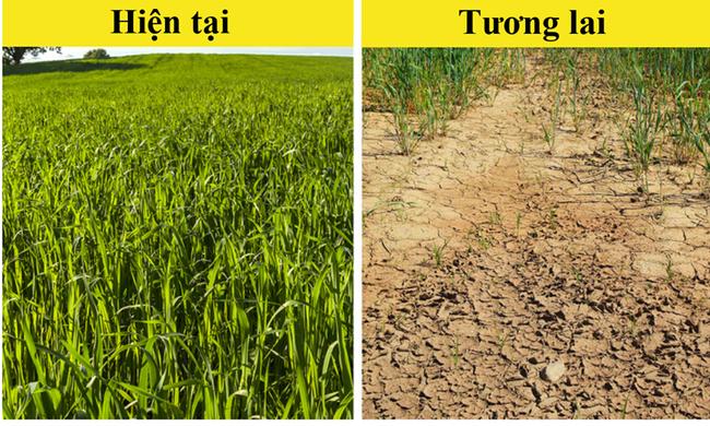 """10 loại thực phẩm có nguy cơ """"tuyệt chủng"""" vì biến đổi khí hậu - ảnh 9"""