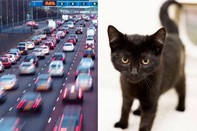 Chú mèo con sống sót thần kỳ bỗng nổi tiếng mạng xã hội - ảnh 2