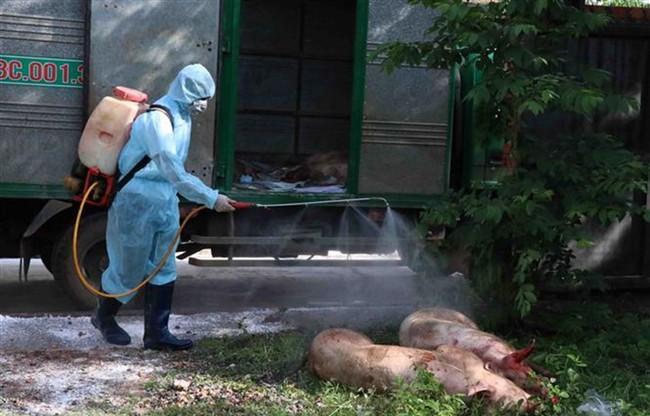 Hỗ trợ người vay bị thiệt hại do dịch tả lợn - ảnh 2