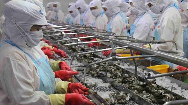 Đẩy mạnh xuất khẩu tôm sang các thị trường tiềm năng - ảnh 2