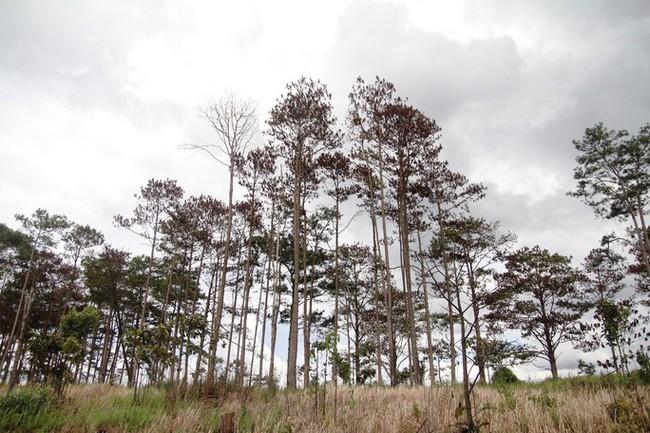 Bắt giam 6 đối tượng về hành vi hủy hoại rừng - ảnh 2