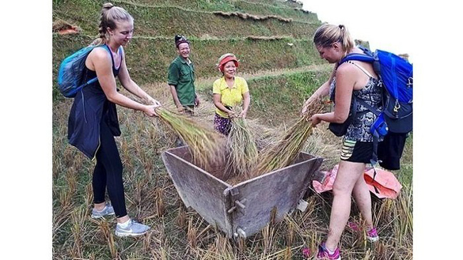 Foreign tourists experience farming activities with local people in Ha Giang province. (Photo: NDO/Linh Phan)