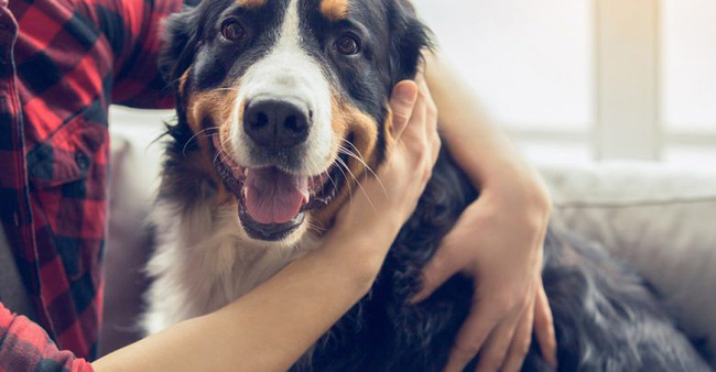 Giải mã bí mật giúp khứu giác của loài chó mạnh gấp 10.000 lần con người |  VTV.VN