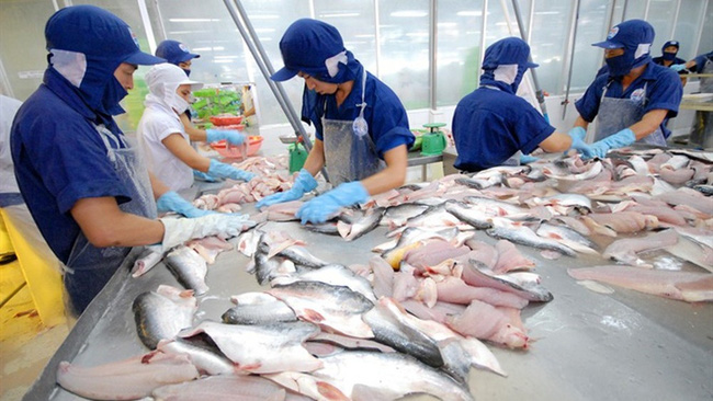 The Vietnamese aquatic industry is expected to gain total export revenue of US$10 billion in 2019, an annual increase of 10-12%. (Illustrative image)