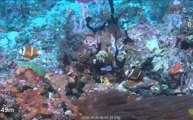 Phát hiện rặng san hô khổng lồ cao đến 500m tại Australia - ảnh 4