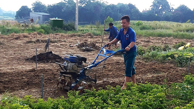 A young member of the Tan Vinh Agro-Forestry-Irrigation Cooperative in Hoa Binh Province ploughs to prepare for new crop cultivation. (Photo: NDO/Linh Phan)