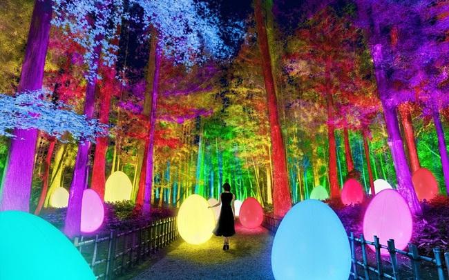 Lạc lối trong ánh sáng huyền ảo tại vườn cổ đẹp bậc nhất Nhật Bản - ảnh 3
