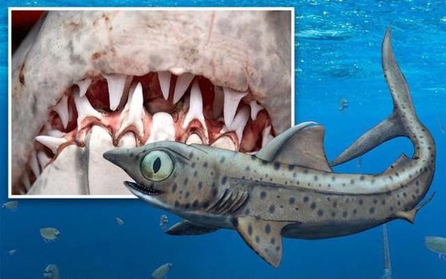Rùng rợn, phát hiện hàm răng quỷ dữ của loài cá mập 370 triệu năm tuổi - ảnh 4