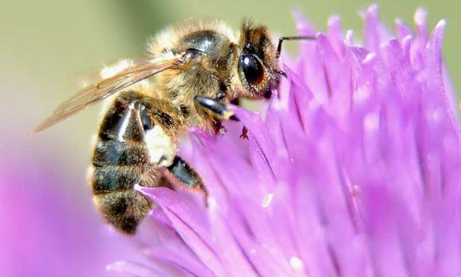 Nửa triệu loài côn trùng có nguy cơ tuyệt chủng - ảnh 1