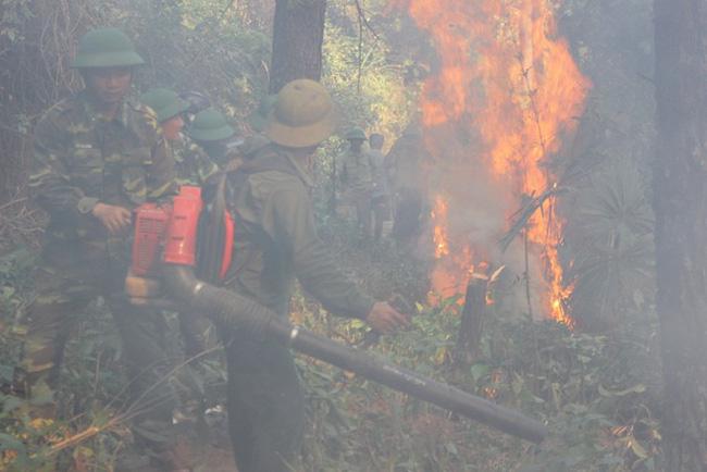 Khống chế vụ cháy rừng thông trên núi Đại Bình, Lâm Đồng - ảnh 2