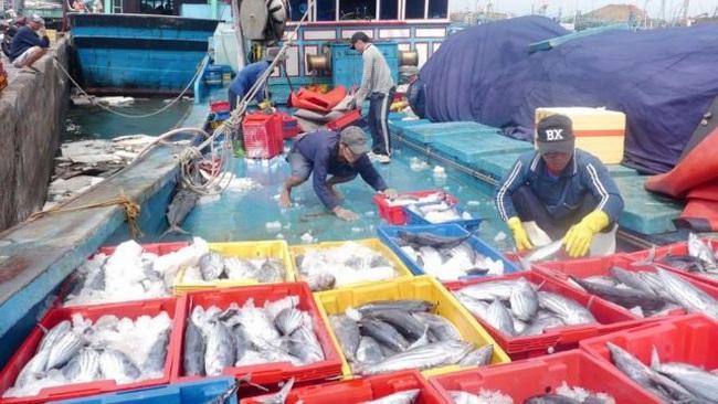 Khanh Hoa fishermen with their tuna catch. (Photo: danviet.vn)