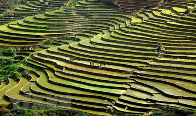Terraced rice fields of Mong ethnic people in Ban Mu commune of Tram Tau district, Yen Bai province (Photo: VNA)
