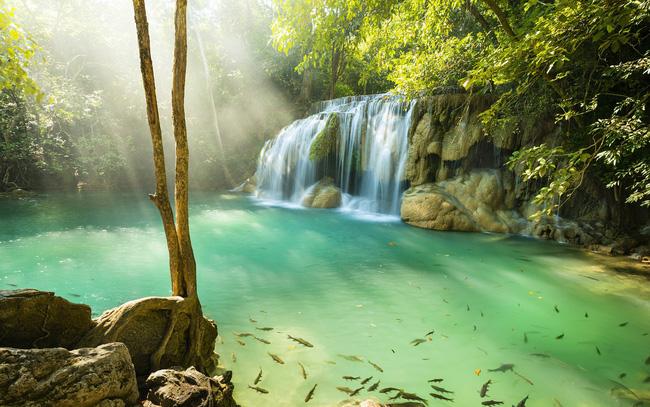 Bảo tồn thiên nhiên, Thái Lan đóng cửa công viên 133 quốc gia - ảnh 3