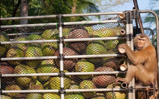 Hé lộ bí mật kinh hoàng của dầu dừa đối với môi trường - ảnh 2